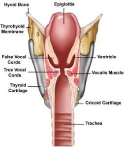 Larynxcutsm