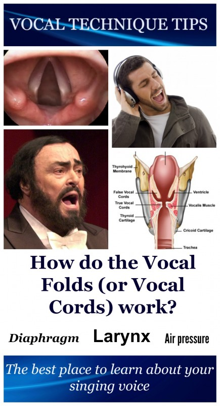 Pin-VTT-How do the vocal cords work