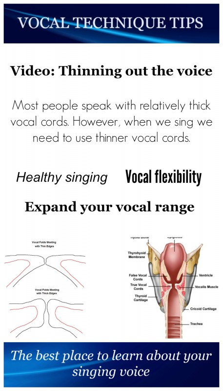 Pin-VTT-thin and thick vocal folds